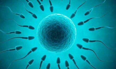 Células germinales2