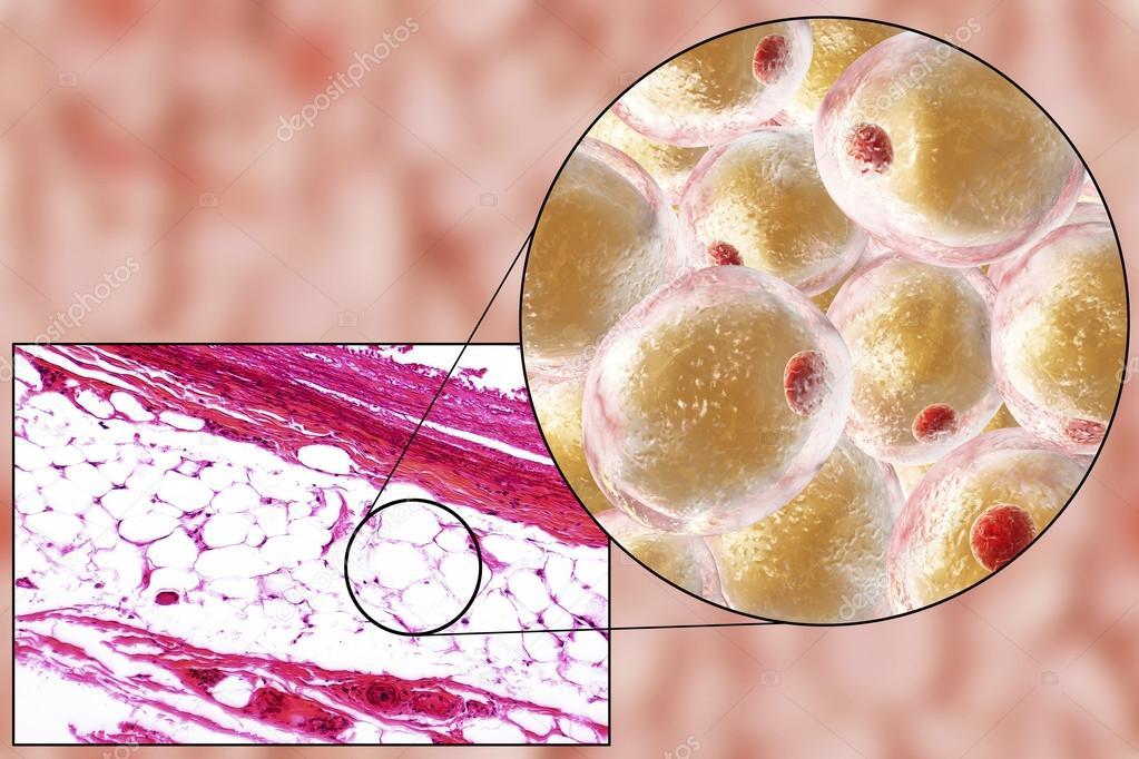 Células adiposas