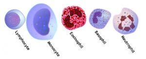 Células blancas