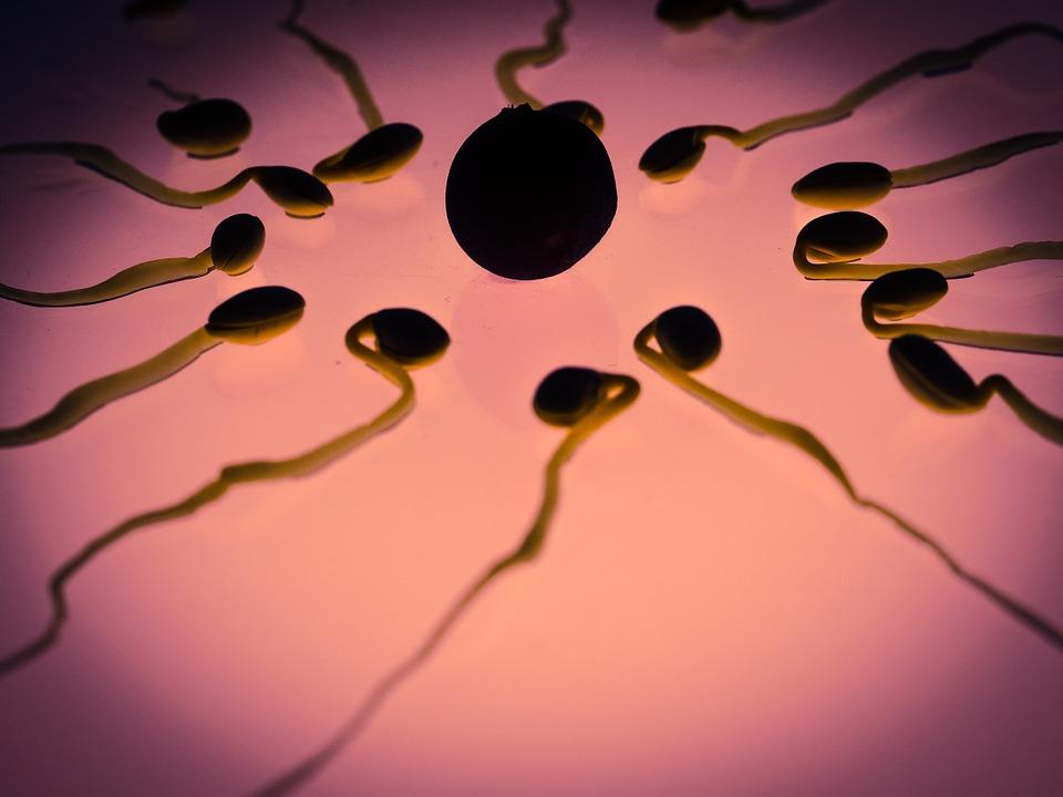 Células sexuales