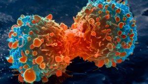 celulas cancerosas