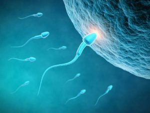 Células germinales1