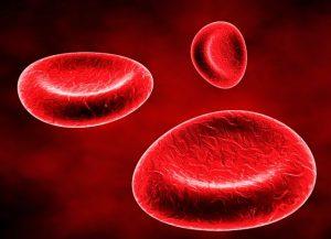 celulas sanguineas 1