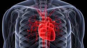 Células del corazón