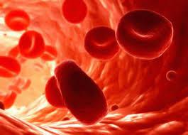 celulas sanguineas 2