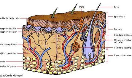 Células de la piel