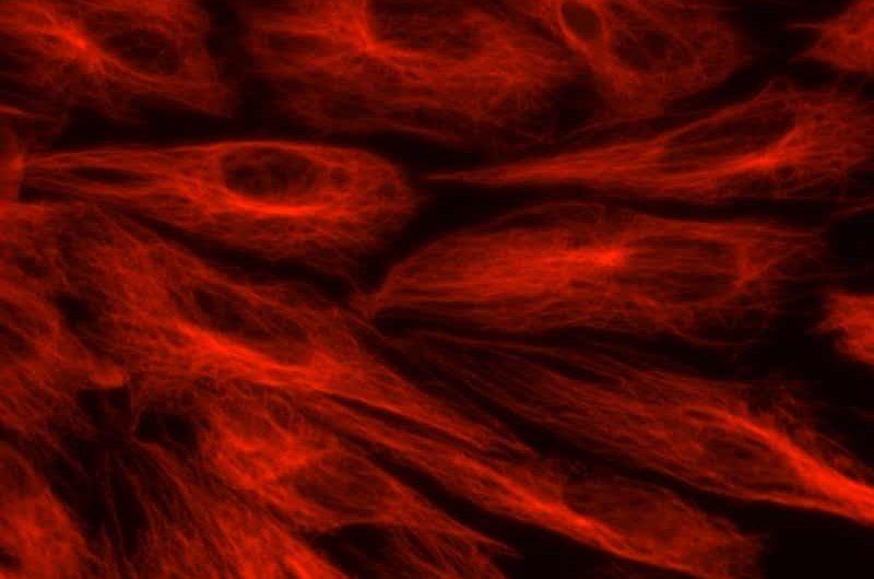 Células endoteliales