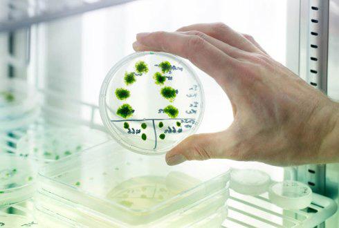 característica de las celulas vegetales