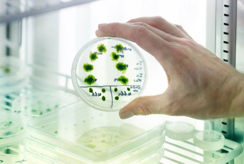 Tipos de celulas vegetales